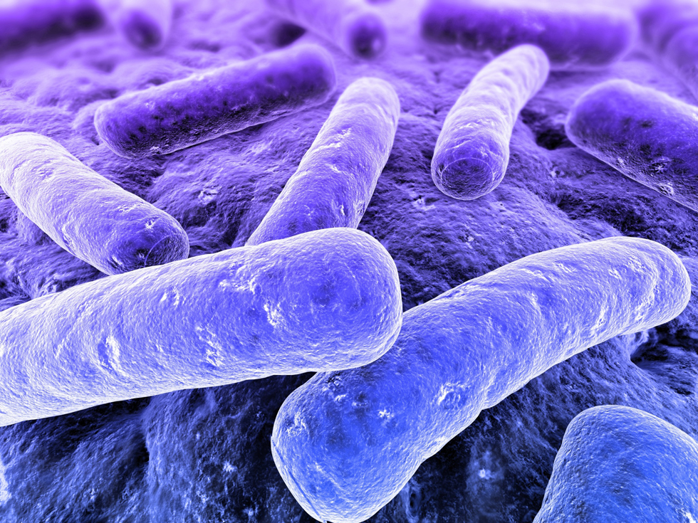 methanobacterium are methane producing archaebacteria biology essay Start studying biology 1010 protista and monera learn methanobacterium archaebacteria (leaky cell walls and/or membranes unable to produce atp.
