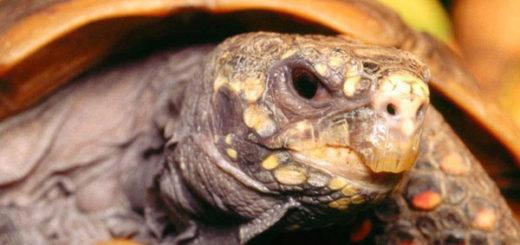 самое старая черепаха
